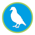 Vogelabwehr